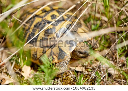 Tortoise in the garden #1084982135