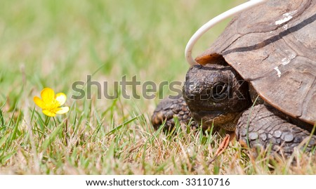 Tortoise recovering from surgery with an oesaphageal feeding tube - stock photo