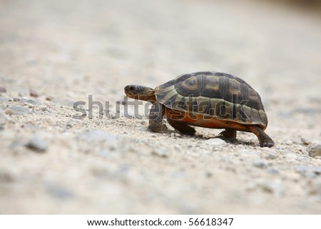Tortoise walking on the sand