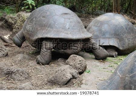 Tortoises are slow-moving reptiles. Although feeding giant tortoises browse with no apparent direction, when moving to water-holes or nesting grounds, they can move at a surprising speed.
