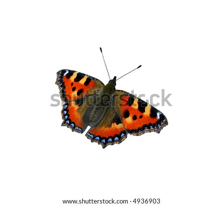 Tortoiseshell butterfly isolated on the white