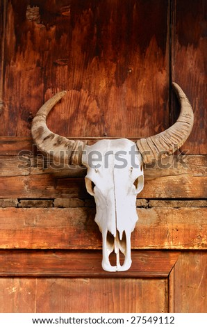 totem the bull skull with horns on wall