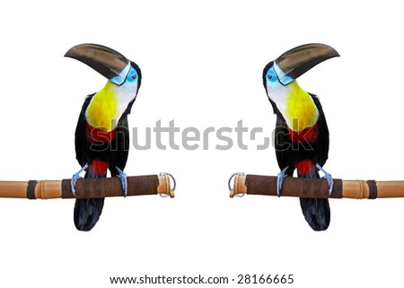 Toucan and exact copy isolated on white.