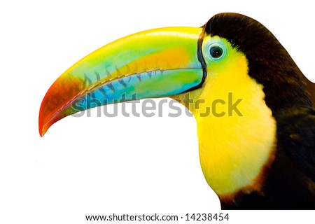 toucan cut out on white