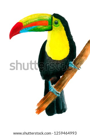 Toucan Keel-billed hand drawing in watercolor isolated on a white background Ramphastos sulfuratus