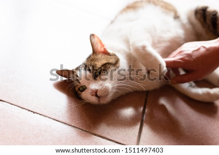 touch and stroke a cat laying on ground at home #1511497403