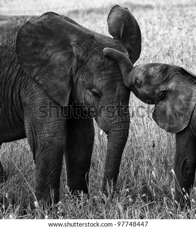 Elephant Wallpaper Black And White Baby