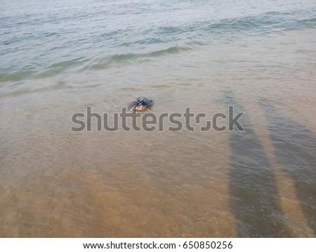 Tough sea life #650850256