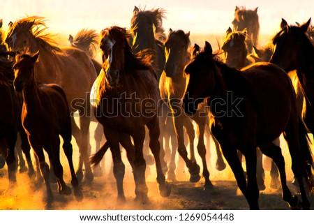 tourism kayseri horses Stok fotoğraf ©