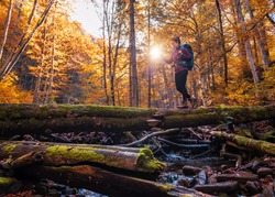 tourist girl with a backpack crosses the stream on the old log in yellow autumn forest