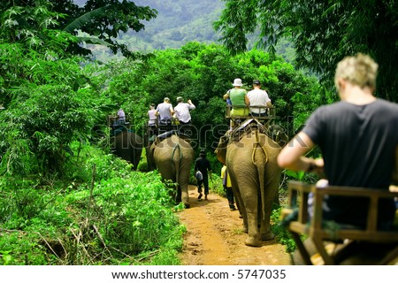 stock photo : Tourist group rides through the jungle on the backs of elephants