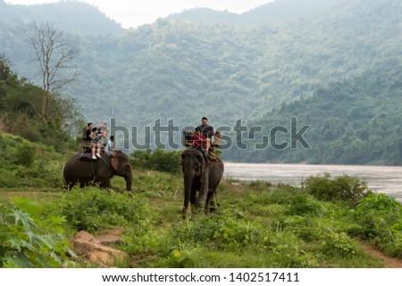 Tourist group rides through the jungle on the backs of elephants. Laos. Luang Prabang. - 15 January 2019 #1402517411