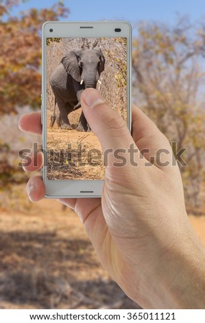Tourist hand taking photograph of elephants using smart phone camera