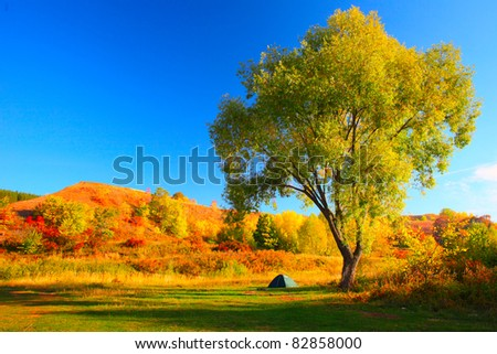 Tourist little tent standing by huge tree on autumn meadow