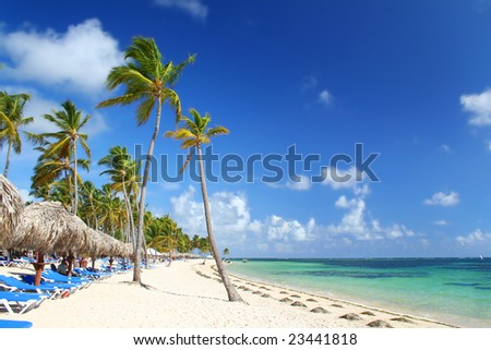 Tourist resort beach dotted with palm trees, beach umbrellas and chairs. Travel & vacation collection.