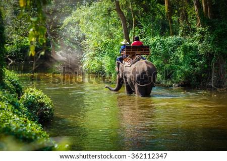 tourist riding on elephants Trekking in Thailand