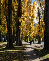 Tourist riding the bike on the Millennium track along the Wanaka lakeside among the autumn trees. Vertical format.