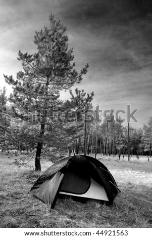 tourist tent near tree in forest