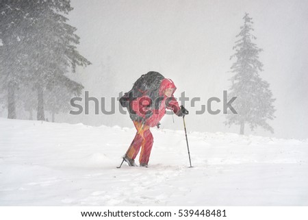 Tourist through a violent storm in the Carpathians is moving toward the goal. In the alpine zone of strong winds and snow impairs visibility and creates problems with orientation #539448481