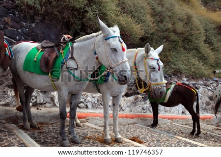 Touristic donkeys in the island of Santorini