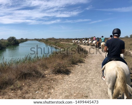 Touristic tours on white Camargue horses in the south of France