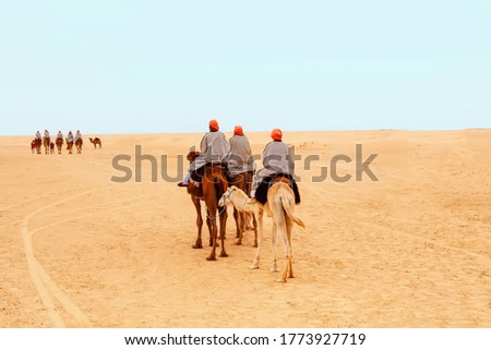 Tourists dressed in striped robes and orange turbans on their heads riding on two-humped camels for a walk in the Sahara desert, Tunisia. View from the back