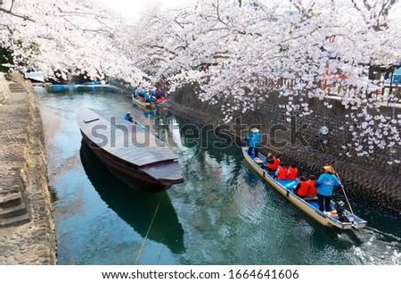 Tourists enjoy the view of cherry blossom trees (Sakura) in Hanami boats steered by boatmen on a canal, in Ogaki City (the final destination of the historic Oku no Hosomichi Journey 奥の細道), Gifu, Japan 商業照片 ©