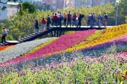 Tourists gathering on the stairway to enjoy the scenery of colorful flower fields on the hillside on a sunny spring day during Flower Festival in San-Tseng-Chi Urban Park, Beitou, Taipei City, Taiwan