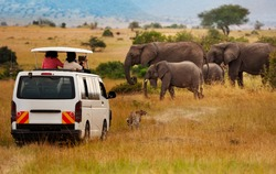 Tourists on game drive taking picture of elephants