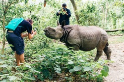 Tourists take photos baby rhino stands in the tall green grass nepal