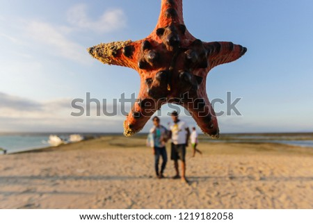 tourists take pictures with starfish.