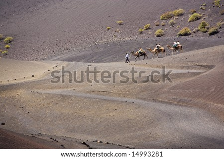 tourists taking a camel ride at Timanfaya national park, Lanzarote - stock photo