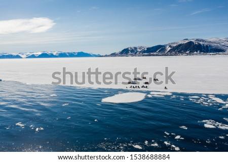 Tourists visit the flo edge near Sirmilik National Park in Nunavut, Canada #1538688884
