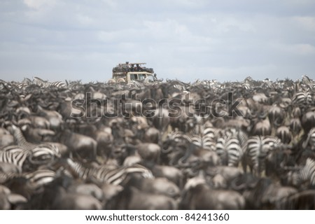 Tourists watching large herd of wildebeest and zebras at the Serengeti National Park, Tanzania, Africa