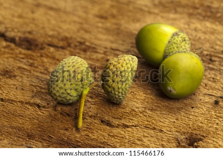 Tow green acorn hats and acorns on barks background as close up view