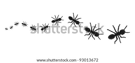 Toy Ants in a Line on White Background
