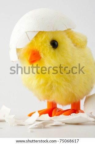 Toy baby chicken with eggshell on head