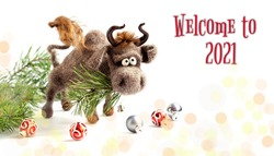 Toy bull, a symbol of the New year. Knitted brown toy bull on a white background with a pine branch in his mouth. Copy space, close-up, selective focus. The concept of welcome to 2021.