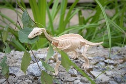 toy dinosaur skeleton on a stone in a pasta leaf of a tree
