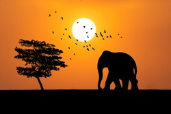 Toy Elephant silhouette with tree and birds with Sun during evening.