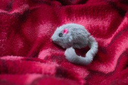 Toy mouse, used for stimulate your cat's natural instincts. Grey furry toy that resemble a mouse, pink details. Reddish-pink textured background slightly blurred.