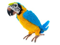 Toy parrot