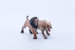 Toy two Smilodon saber-toothed roaring and in attack position fighting with white background front view