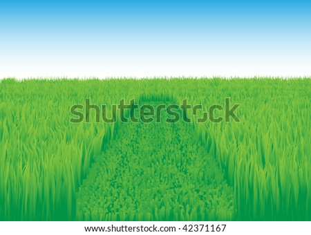 Trace on a green grass from a lawn-mower. An oblique grass