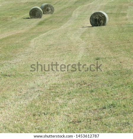 Traces of a baler in a green meadow with three hay bales in round bale nets in the background. Copy space in the green grassland. #1453612787