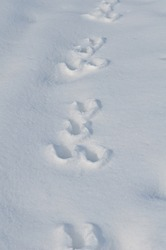 Traces of a hare on a white snow