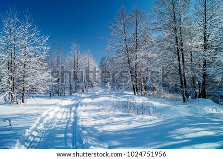 Track left by skis in beautiful wood on background blue sky in winter - Shutterstock ID 1024751956