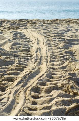 Track of tortoise on sand