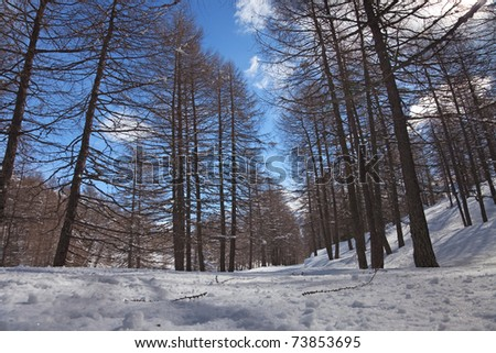 Track to Pianaccio Valley during winter. 1900 meters on the sea-level. Gravel is under deep snow. Brixia province, Lombardy region, Italy