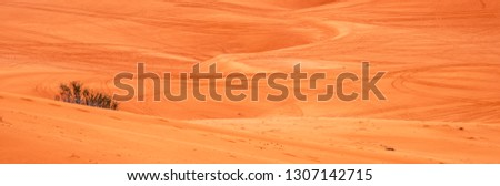 Tracks in the Sand made by dune buggeys at Corel Pink Sand Dunes State  Park in Utah form texture